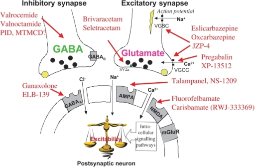 How Gabapentin works
